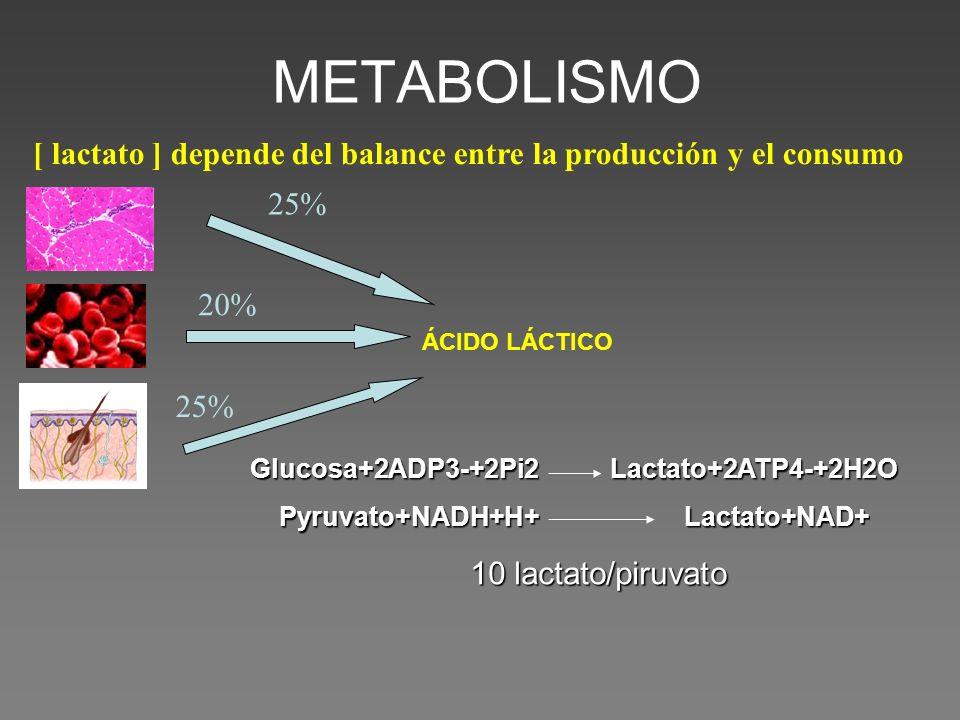 [ lactato ] depende del balance entre la producción y el consumo